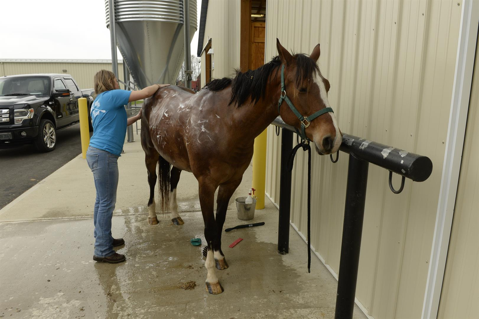 An student washes a horse.