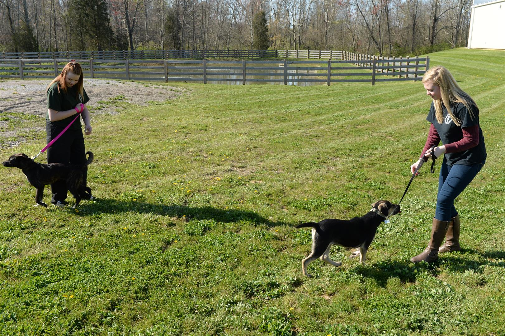 Students walk dogs in a field of grass.