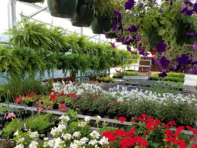 Photo of plants for sale in GCHS Greenhouse