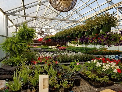 Photo of plants for sale at GCHS Greenhouse