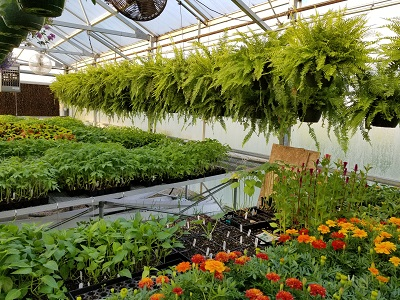 Photo of plants for sale at GCHS FFA Greenhouse
