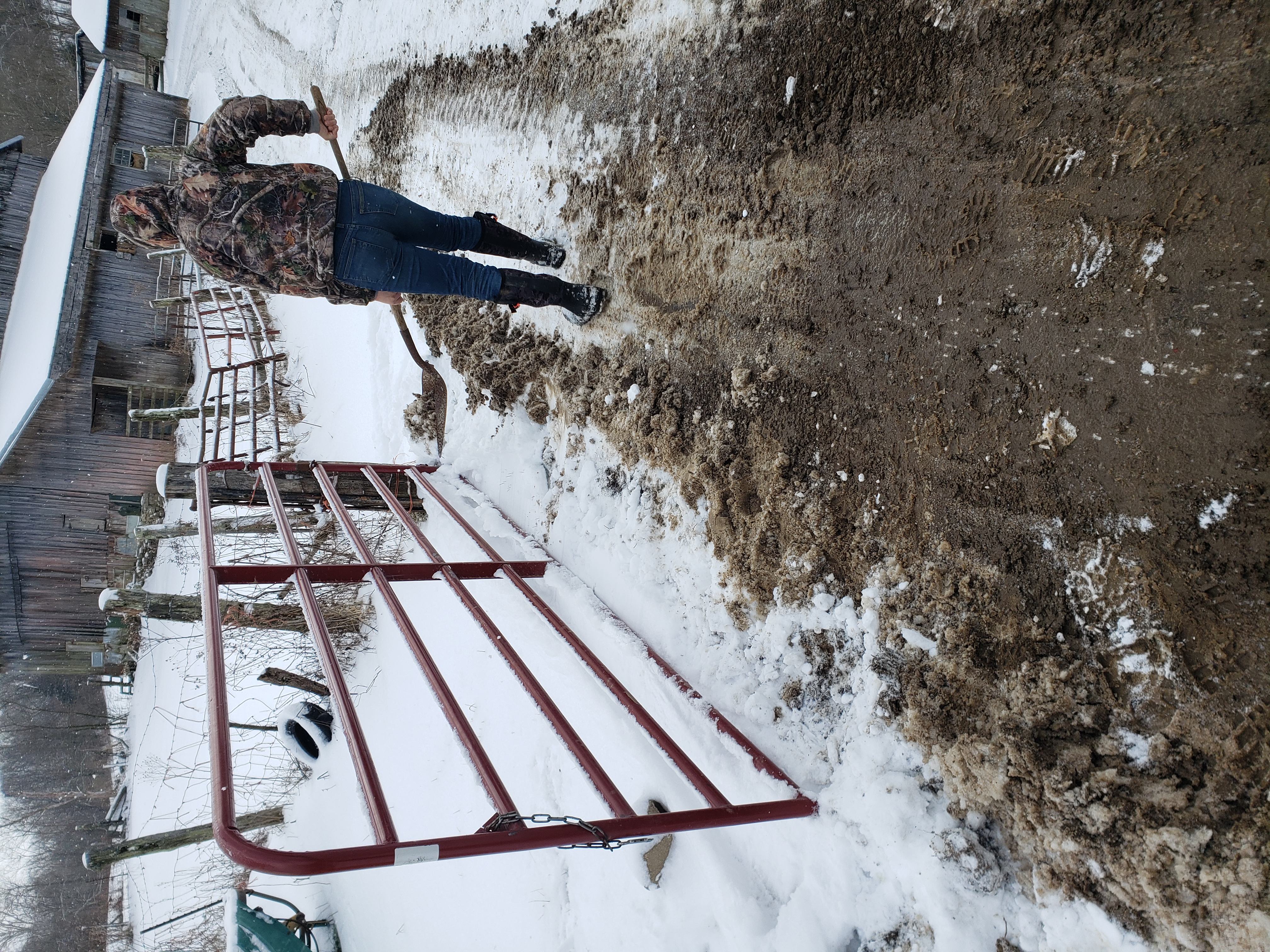Student clears snow from pathway to barn.